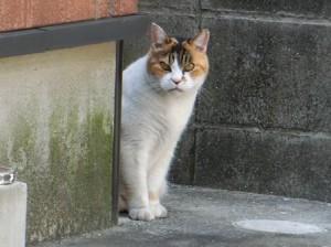 gallery_201504 外猫さん4