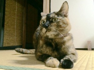 gallery_201508 モモちゃん